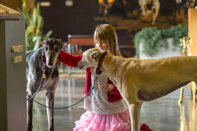 Greyhound-Hall-Of-Fame