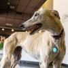 Greyhound-Hall-of-Fame-Museum-Abilene,KS