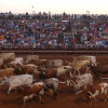 longhorn_cattle_abilene_rodeo.jpg