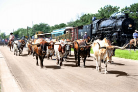 Chisholm-Trail-Abilene,KS-Longhorn